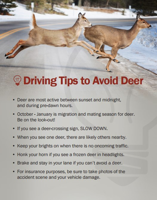 Deer driving tips